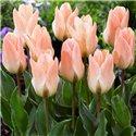 Тюльпан низький ранній Little Girl 1 цибулина