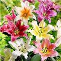 Лилия садовая смесь (35 грамм ДЕТКА)