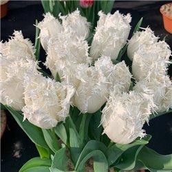 Тюльпан бахромчатый Estafette3 луковицы