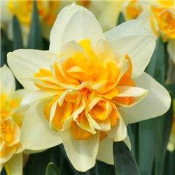 Нарцисс крупнокорончатый Peach Cobbler 1 луковица