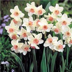 Нарцисс батанический Bell Song 1 луковица