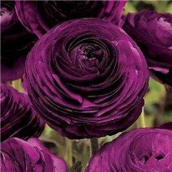 Лютик tomer Purple 3 луковицы