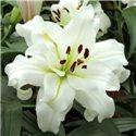 Лилия махровая О.Т. гибрид White Eyes 3 луковицы