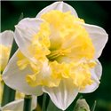 Нарцис спліт-корона Printal 1 цибулина