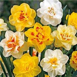 Нарцисс махровый микс 5 луковиц