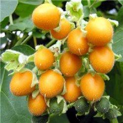 Томатне дерево Тамарілло жовте 1 саджанець