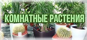 Купить комнатные растения