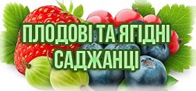 Купити плодові та ягідні саджанці
