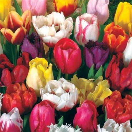 Тюльпан садовый микс 10 луковиц