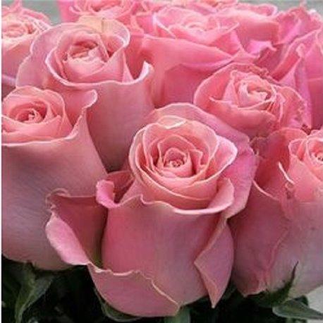 Роза чайно-гибридная Hermosa