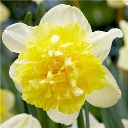 Нарцисс махровый Full House 2 луковицы