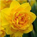 Нарцисс махровый Heamoor 1 луковица