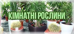 Купити кімнатні рослини